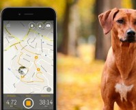 Dog Walk GPS Tracking