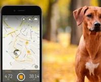 Dog Walk GPS Tracking